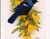 NZ Tui on Kowhai blossom signed frameable card/print