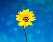 """Nature Photography - Yellow Flower, Limited Edition, Fine Art Photography 8"""" X 8"""""""