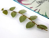 Bookmark: Pressed Vine