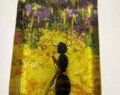 Clear rectangle embedded insect pendant with yellow and purple flower background