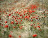 Poppy Road. Art Photography Print.