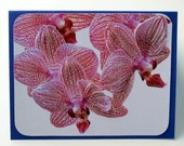 2D Cattleya Hybrid Orchid Cards - one each