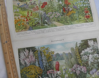 1924 Botanicals -  German Lithograph - Plants, Flowers - Red, Green, Yellow Pretty Lithograph- Frameable Art