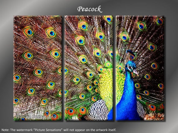 Framed Huge 3 Panel Bird Peacock Giclee Canvas Print - Ready to Hang