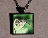 Damselfly Close Up Photo Pendant Necklace - Dragonfly Necklace