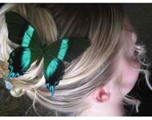 Blue Accented Real Butterfly Hair Clip -Blumei