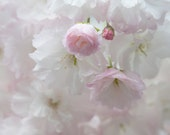 Flower Photography - Pale Blossoms Baby Pink White Fine Art Photography Affordable Nursery Decor Kids Room Botanical Photo
