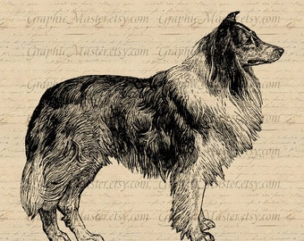 Collie Colly Dog Clip Art for Image Download t shirt printing Iron On Transfer Graphics to Fabric Clothing Tote Bags Pillows Tea Towels An90