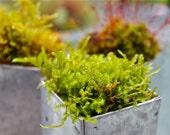 Moss planters set of 3