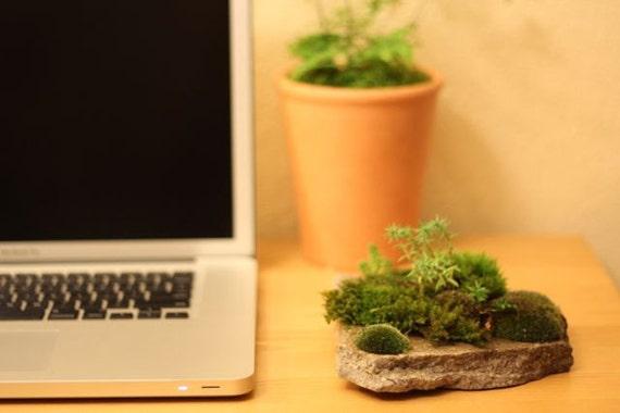 Moss Rock Garden 3