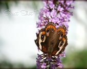 "Butterfly 'Mirror' Photo - Monarch Butterflies, Butterfly Photography, Butterfly Art Photo Print, 8""x10"""