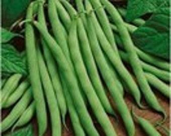 Heirloom Bush Bean Blue Lake 274, Seeds, Easy To Grow, Canners, 20 Seeds