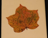 Set of Four Leaf Peeper Coasters Featuring Yellow Leaves
