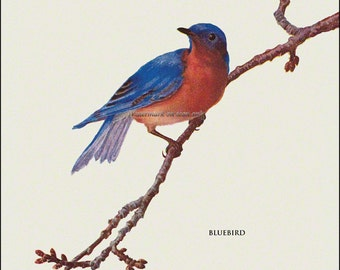 Bluebird Fabric Block Song Bird - Repro from Prang 1889 Image