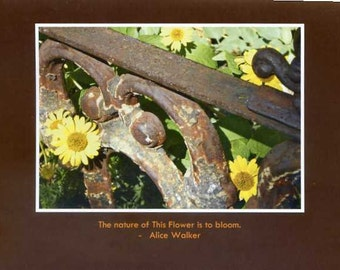 Alice Walker quote - photo card