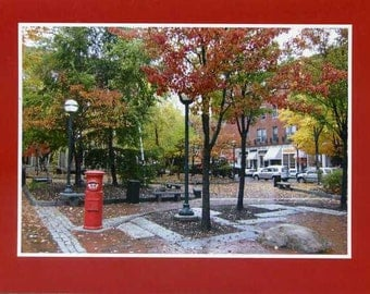 Tommy's Park in the autumn - photo card