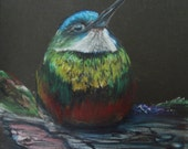 Rufous Tailed Hummingbird on Black Card
