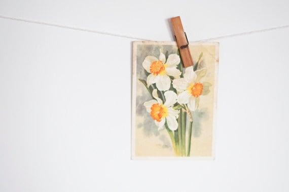 Vintage soviet postcard - daffodil flowers