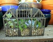 Gorgeous Wire Birdcage Succulent Planter