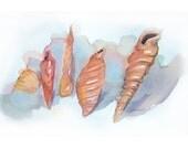 Watercolor painting seashells-Seashell's watercolor painting-Art painting watercolor