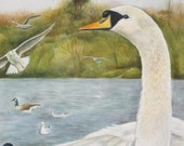 Swans and seagulls painted in watercolour very high detail unframed