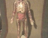 "Super Rare Vintage 1959 ""THE VISIBLE MAN"" Patent Pending Educational School Assembly Human Anatomy Model Kit"