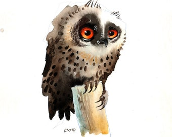 The Thoughtful Owl, Fine Art print
