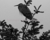 "Fine Art Photograph: ""Heron Home"" 8x10 print"