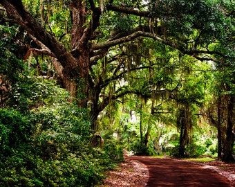 "Savannah Trail Landscape Photograph Print  ""Walk in Savannah"" 8x10 (and larger) Photo Print, Home Decor Wall Hanging, Travel Photogrpahy"