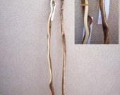 New Mexico Locust Walking Sticks