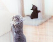Grey and Black Kittens Climbing and Playing Vintage Look 5 x 7 Photographic Print