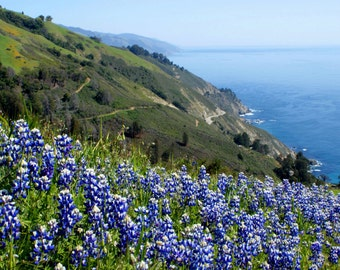 Boronda Trail - Big Sur, California Photo Greeting Card