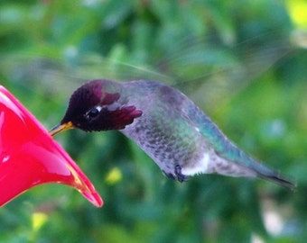 Hummer In Motion - Big Sur, California Photo Greeting Card