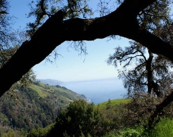 Tree Arch View - Big Sur, California Photo Greeting Card