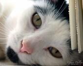 Cat's Gaze Print 8x10