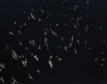 Bats.   Austin, TX Congress Street Bridge Bat Migration Black Swarm of Natural Translucence 8x10