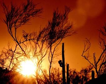 Dove Mountain | Desert Sunset Orange Copper Cactus Silhouette Sun- Tortalita Dusk Madena, Arizona Fine Art Photography 8x10