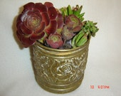 Antique brass pot with planted succulents
