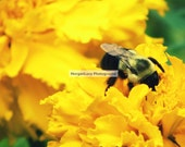 5x7 Bumble Bee