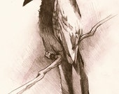 White Winged Crow - Original Sketch