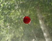 Glass Screen Bugs - Water Skitter (various colours - 10 available)