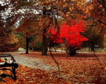 Last Man Standing - A 12 x 18 Fine Art Color Photograph