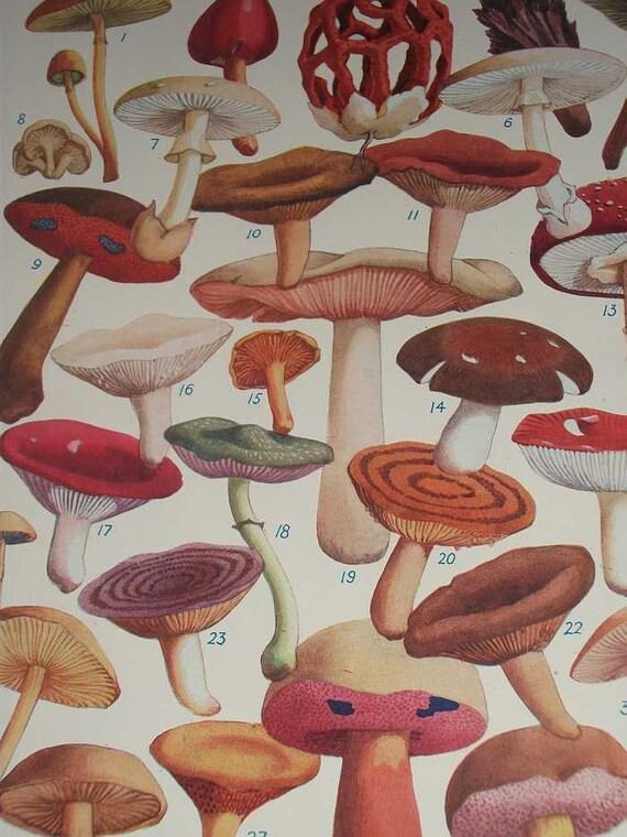 1930s Enquire Within Print of Poisonous British Fungi Fungus