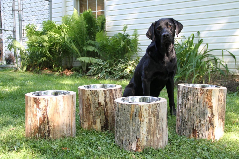 Log Dog Feeders Raised