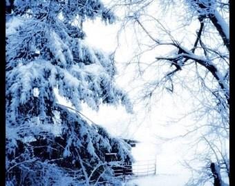 Blue Winter - Print