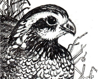 Pen and Ink Drawing Bird Quail Bob White Original Drawing Black and White Paint Chip Art