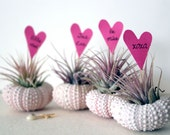 4 LOVE  // air plants // urchin terrarium garden