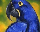 original Oil painting HYACINTH MACAW PARROT wild bird Sale