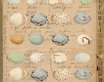 INSTANT DOWNLOAD DIGITAL Collage Sheet Bird Eggs