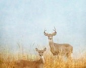 Deer World, Buck, Animal Photo, Wildlife Photography, Fog Print, Texas Prairie, Landscape Photography, Nature Decor